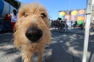 Bicycle Valet Photo 1 DOGGIE