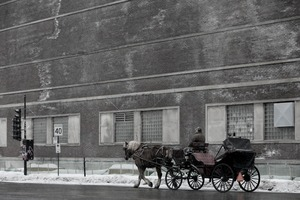 Horse and buggy photo